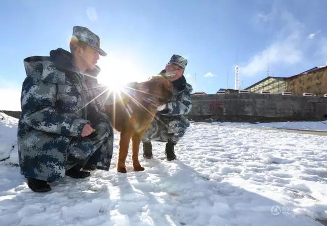 """雪山之巅的""""最老""""兵王-最可爱的人-国际新闻最新消息"""