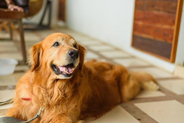 老人视爱犬为家人 赠其百万遗产