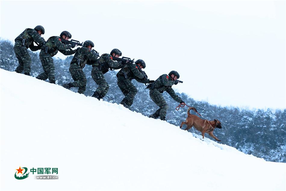 """踏雪寻踪!警犬助力山林""""追凶"""