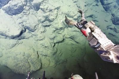 我国南海遥控深潜科考成果丰硕