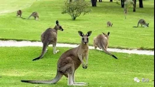 澳大利亚居然感到意外?中国考虑对其大麦加征关税